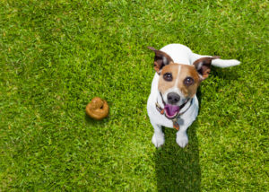 best pet poop removal service